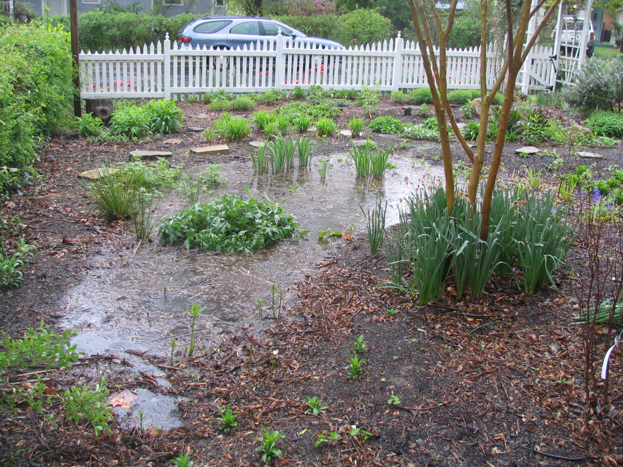 Native plant rain garden holding water after a rain storm