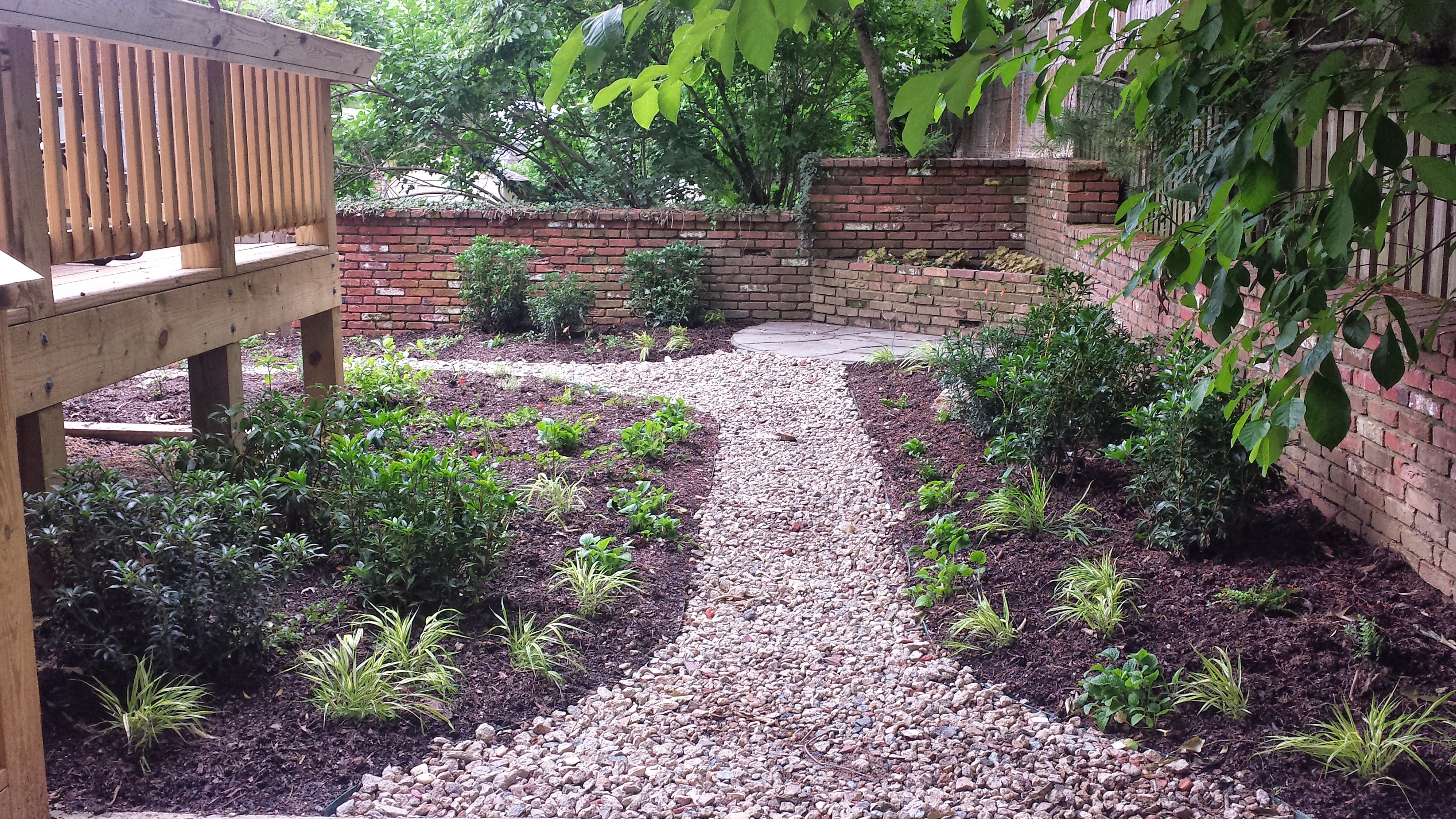 Backyard native landscaping with gravel path