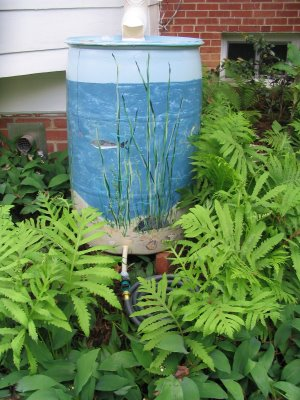 painted rain barrel in fern garden