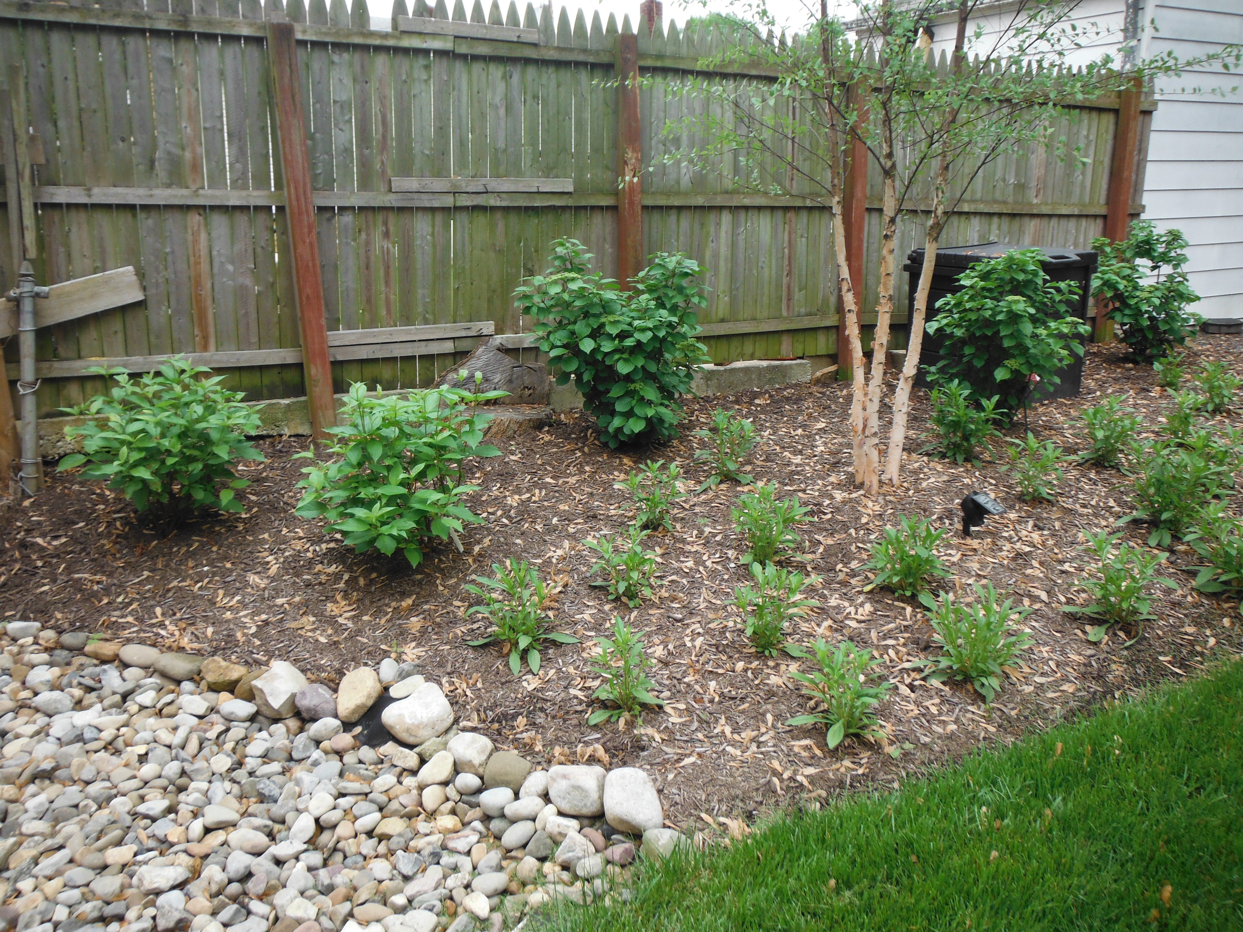 Native plants, shrubs, and trees in a backyard garden